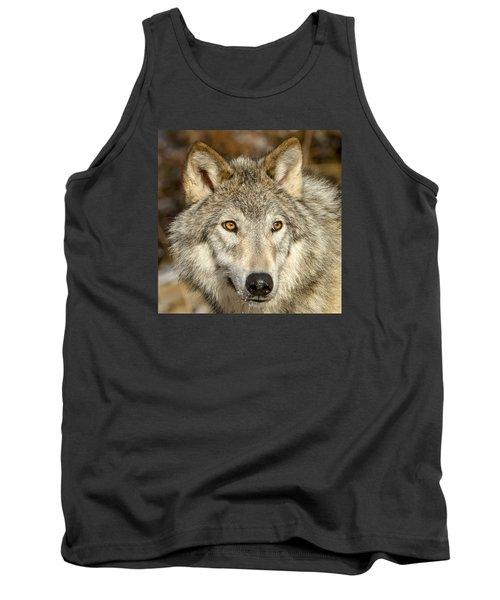 Wolf Portrait Tank Top by Jack Bell