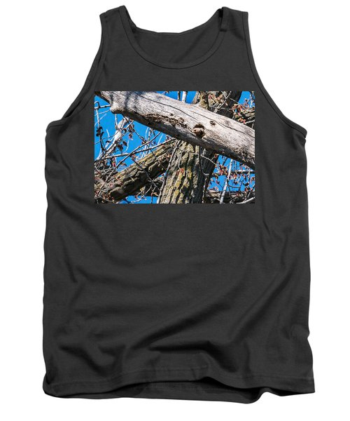 Yellow-shafted Northern Flicker Nest Building Tank Top by Edward Peterson