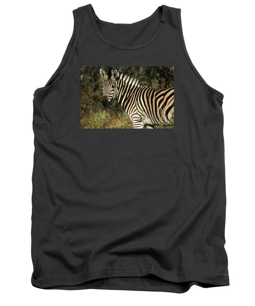 Zebra Watching Tank Top