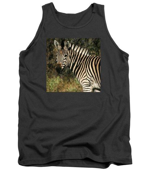 Zebra Watching Sq Tank Top