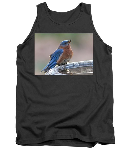 Male Eastern Blue Bird Tank Top