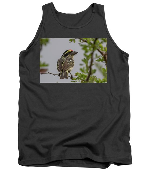 Red-fronted Barbet Tank Top
