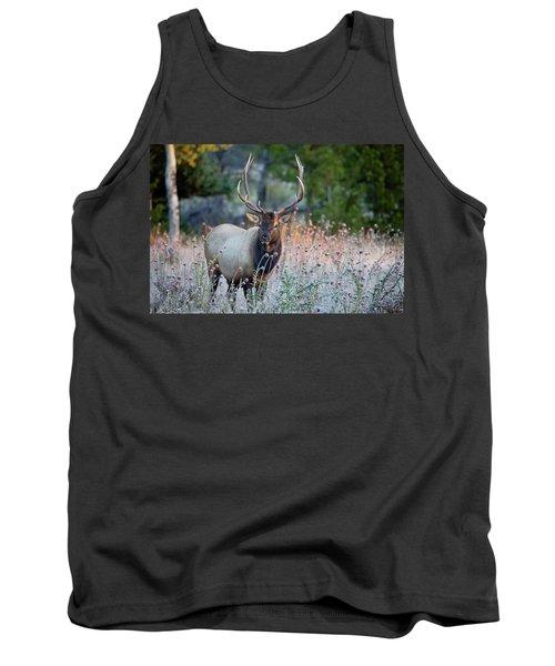 Rocky Mountain Wildlife Bull Elk Sunrise Tank Top