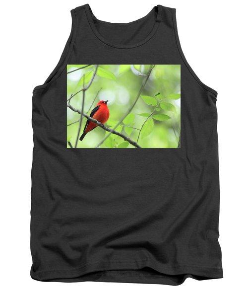 Scarlet Tanager Tank Top