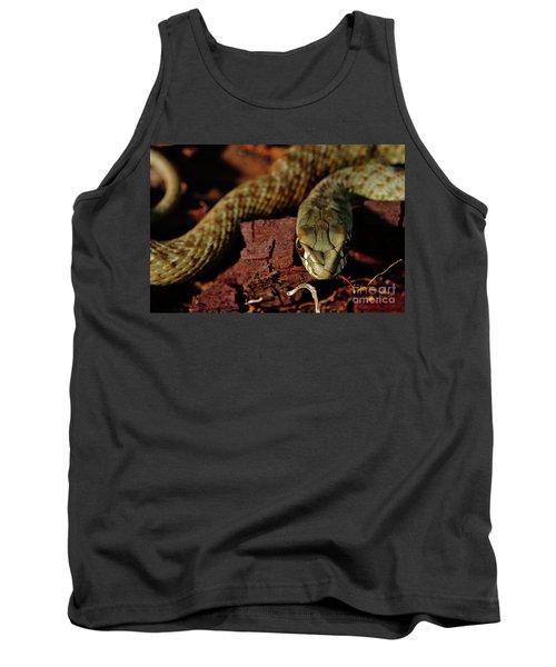 Wild Snake Malpolon Monspessulanus In A Tree Trunk Tank Top