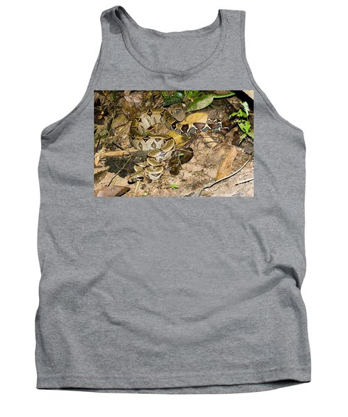Boa Constrictor Tank Top by Gregory G. Dimijian, M.D.