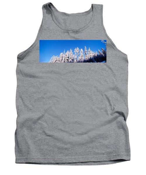Usa, Oregon, Pine Trees, Winter Tank Top