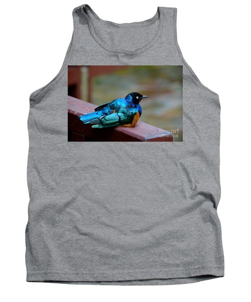 African Superb Starling Bird Rests On Wooden Beam Tank Top