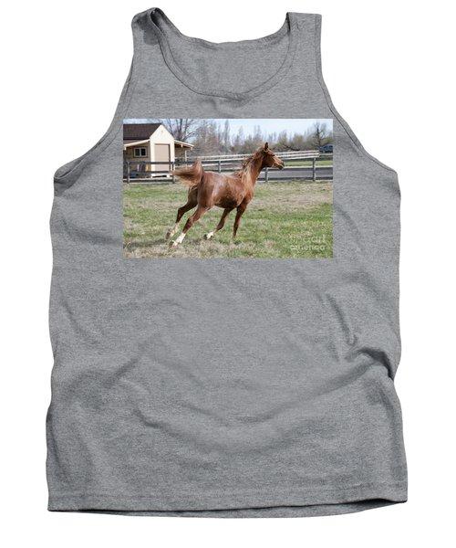 Arabian Horse Running Tank Top