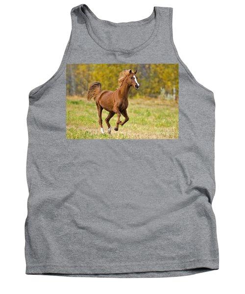 Arabian Stallion Galloping Tank Top