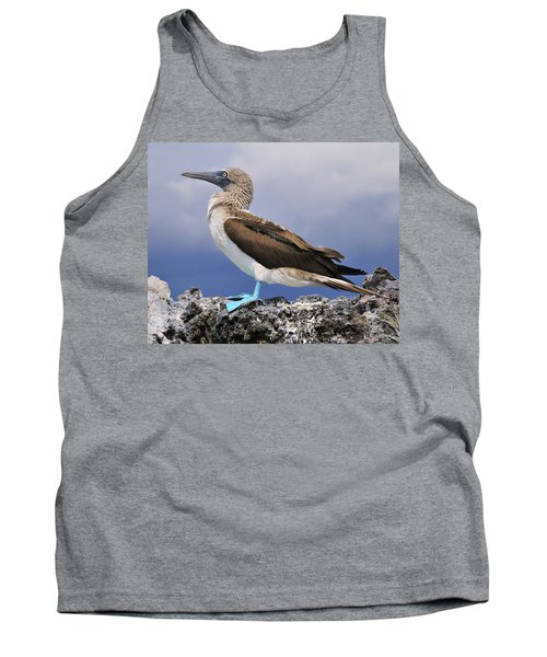 Blue-footed Booby Tank Top by Tony Beck