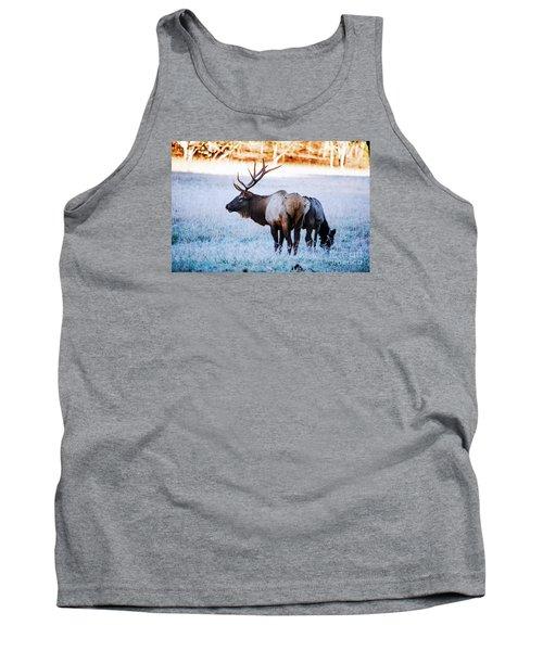 Bull Elk And Cow Tank Top