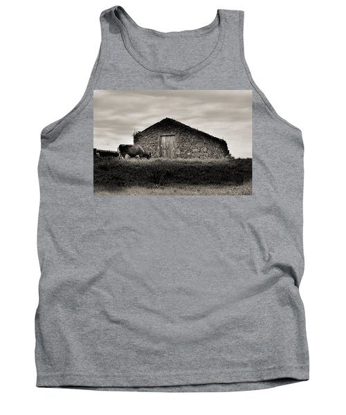 Cow Grazes At Rustic Barn  Tank Top