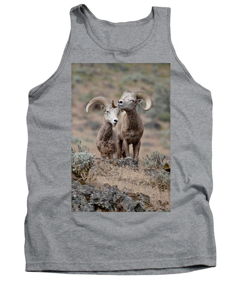 Tank Top featuring the photograph Playfull Rams by Athena Mckinzie