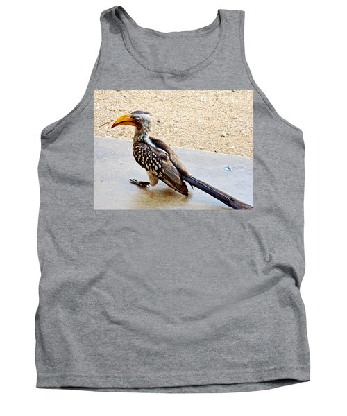 Southern Yellow-billed Hornbill In Kruger National Park-south Africa Tank Top