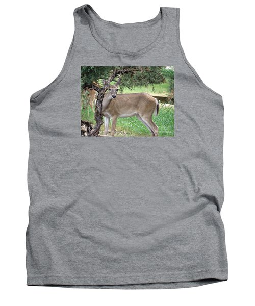 Tank Top featuring the photograph Texas Beauty - White Tail Doe by Ella Kaye Dickey