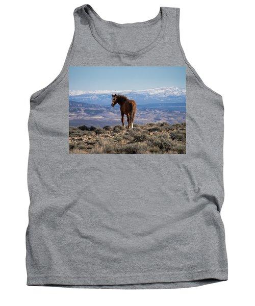 Wild Stallion Of Sand Wash Basin Tank Top