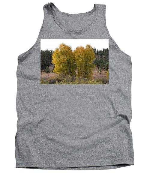 Aspen Trees In The Fall Co Tank Top