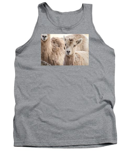 Tank Top featuring the photograph A Little Lamb Cuteness by Yeates Photography