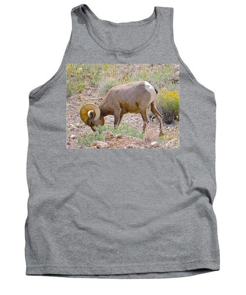 Big Horn Sheep Tank Top