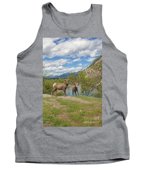 Bighorn Sheep In The Rocky Mountains Tank Top by Patricia Hofmeester