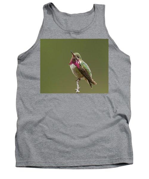 Calliope Hummingbird Tank Top