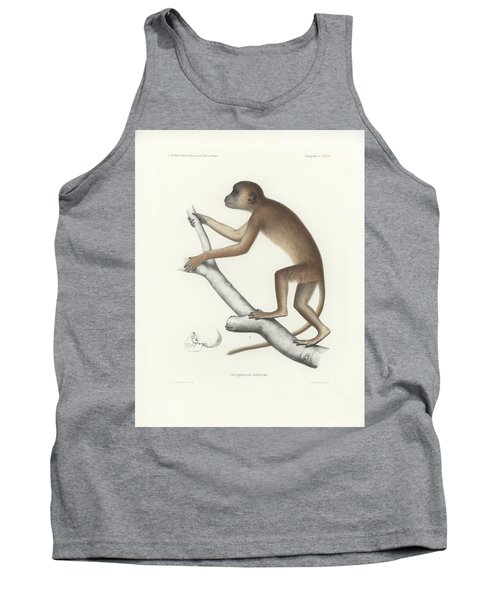 Central Yellow Baboon, Papio C. Cynocephalus Tank Top by J D L Franz Wagner
