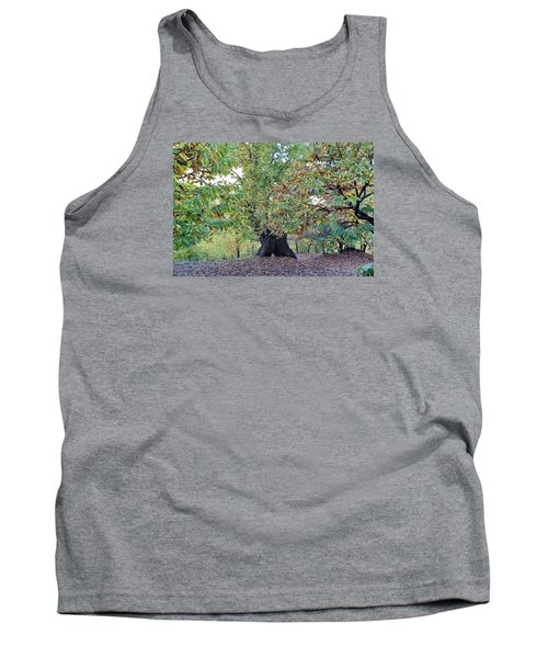 Chestnut Tree In Autumn Tank Top by Goyo Ambrosio