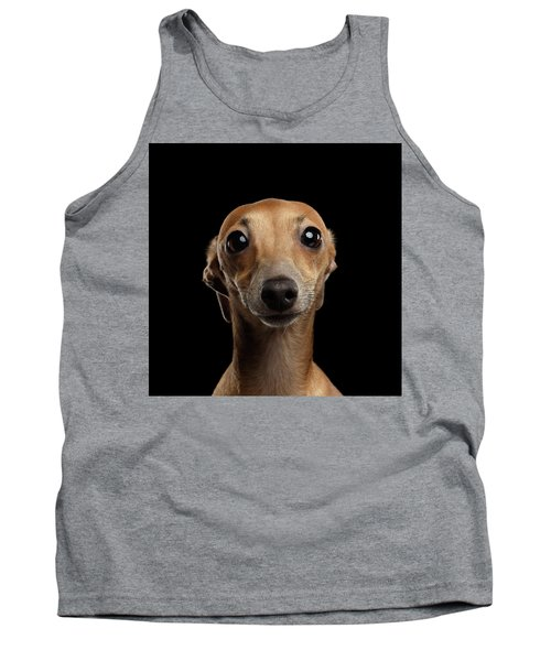 Closeup Portrait Italian Greyhound Dog Looking In Camera Isolated Black Tank Top
