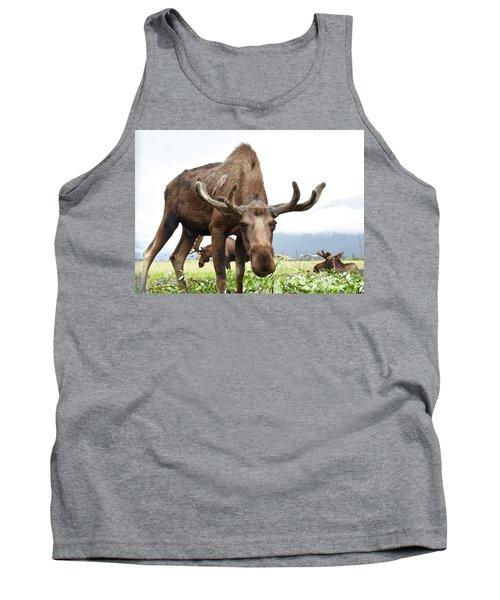Curious Moose Tank Top