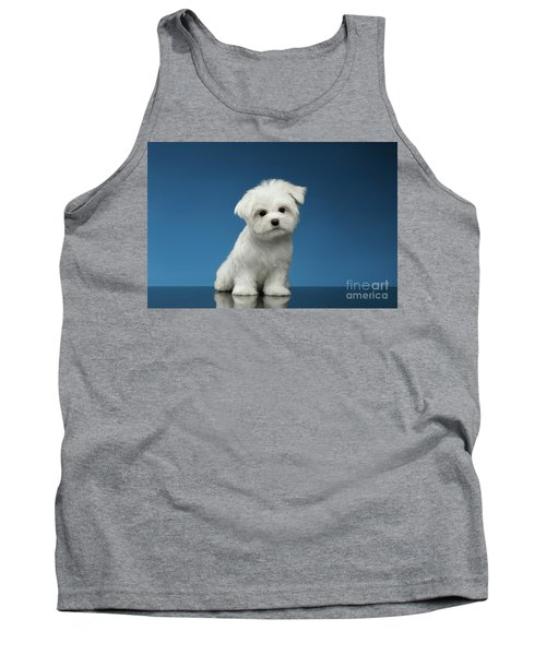 Cute Pure White Maltese Puppy Standing And Curiously Looking In Camera Isolated On Blue Background Tank Top