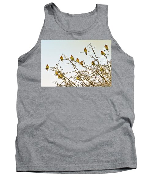 Flock Of Cedar Waxwings  Tank Top