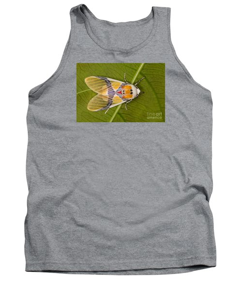 Tank Top featuring the photograph Idalus Carinosa Moth by Gabor Pozsgai