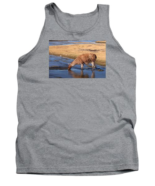 Llama Drinking In River Tank Top by Aivar Mikko