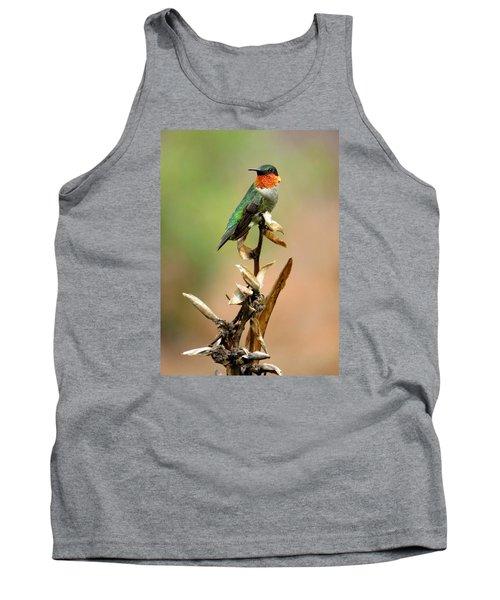 Male Ruby Throat Hummingbird Tank Top by Phyllis Beiser