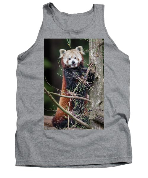 Portrat Of A Content Red Panda Tank Top by Greg Nyquist