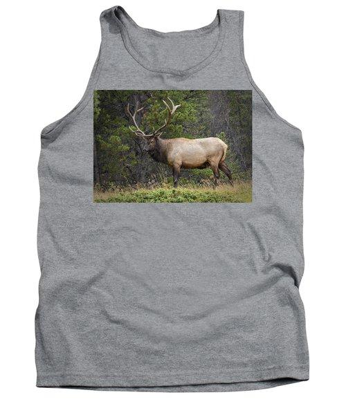 Rocky Mountain National Park Bull Elk Tank Top