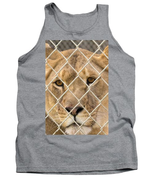 Staring Lioness Tank Top