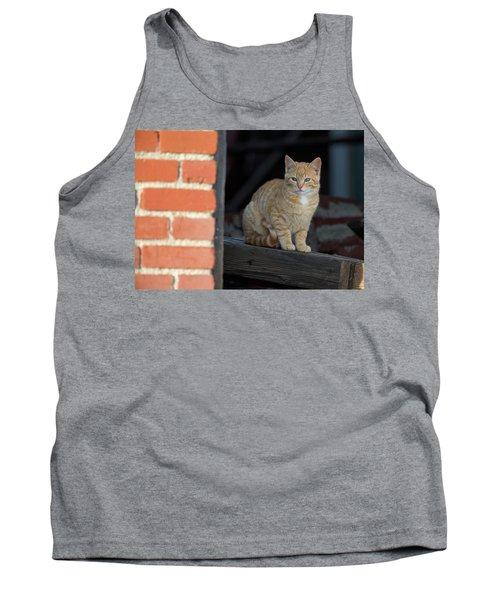 Street Cat Tank Top by Scott Warner