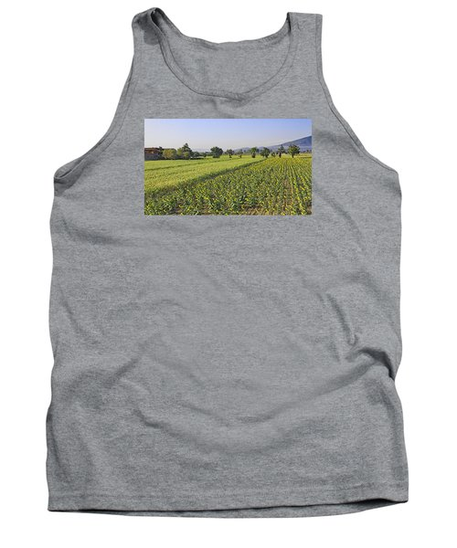 Sunflowers Of Tuscany Tank Top by Allan Levin