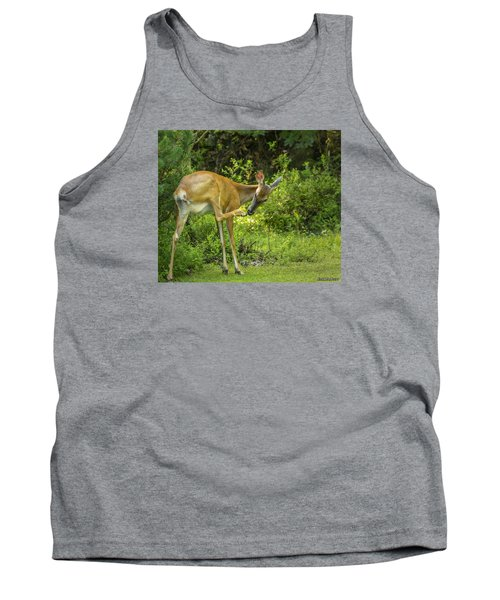White Tailed Deer Scratching It's Nose Tank Top by Ken Morris