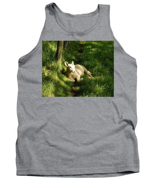 20/06/14  Keswick. Lamb In The Woods. Tank Top