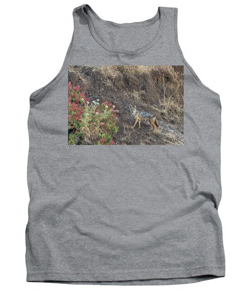 Tank Top featuring the photograph Black Backed Jackal by Alex Lapidus
