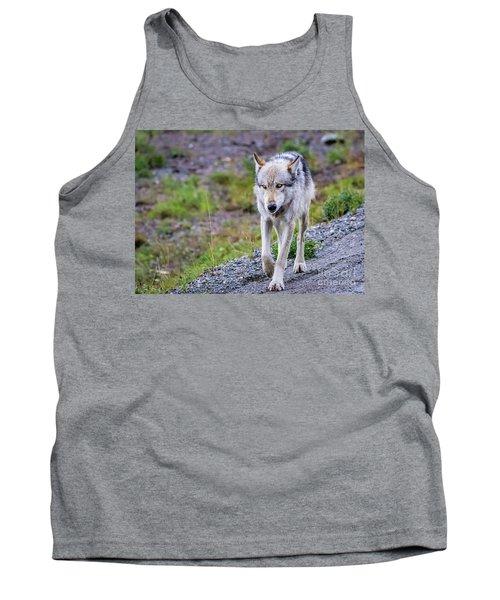 Grey Wolf In Denali National Park, Alaska Tank Top