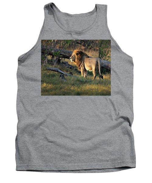 Male Lion In Botswana Tank Top