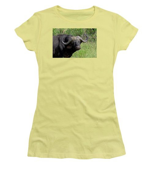 Cape Buffalo Women's T-Shirt (Athletic Fit)