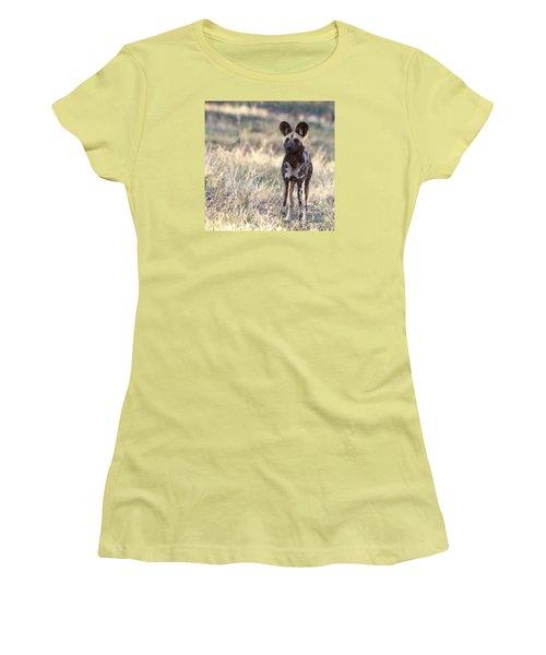 African Wild Dog  Lycaon Pictus Women's T-Shirt (Junior Cut) by Liz Leyden