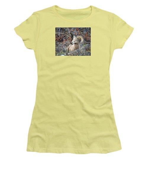 Bedded Bighorn Women's T-Shirt (Junior Cut) by Steve McKinzie
