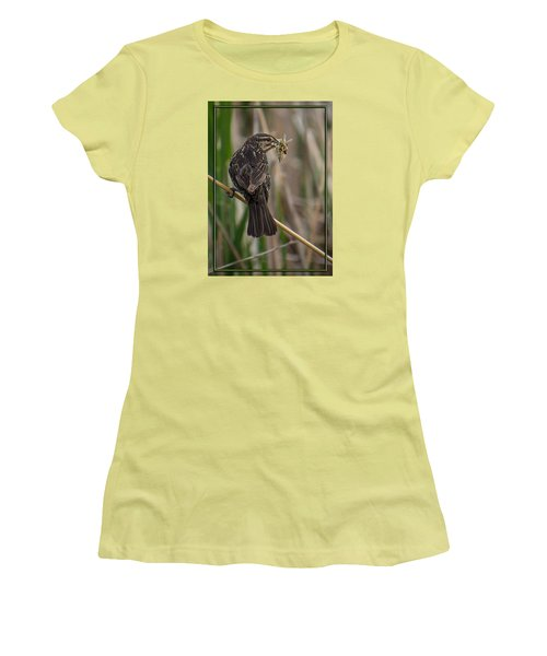 Women's T-Shirt (Junior Cut) featuring the photograph Big Dinner For Female Red Winged Blackbird II by Patti Deters