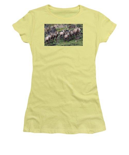 Bighorn Reunion Women's T-Shirt (Junior Cut) by Steve McKinzie
